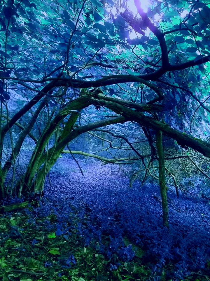 A wooded area with blue purple colors